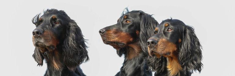 hund2.jpg